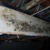 Mold Protection For Maryland Homes